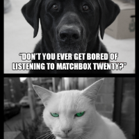 Dog/Cat Q&A - Matchbox Twenty