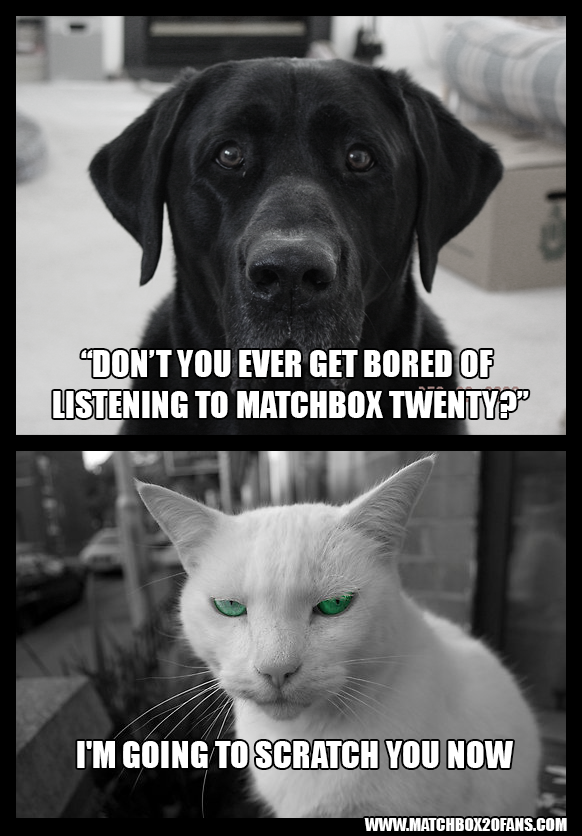 Dog/Cat Matchbox Twenty Q & A