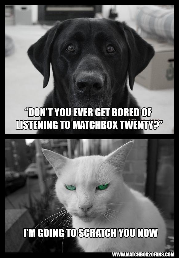 Dog/Cat Matchbox Twenty Q & A
